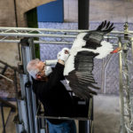 Vorbereitungen für die Ausstellung - © LWL/Gehrmann