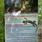 Infotafel Salamanderpest - Essen © Markus Botzek